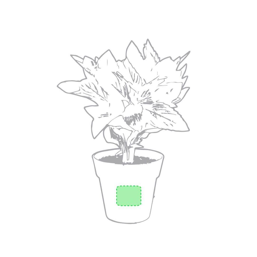 Set de mini macetas con semillas 1